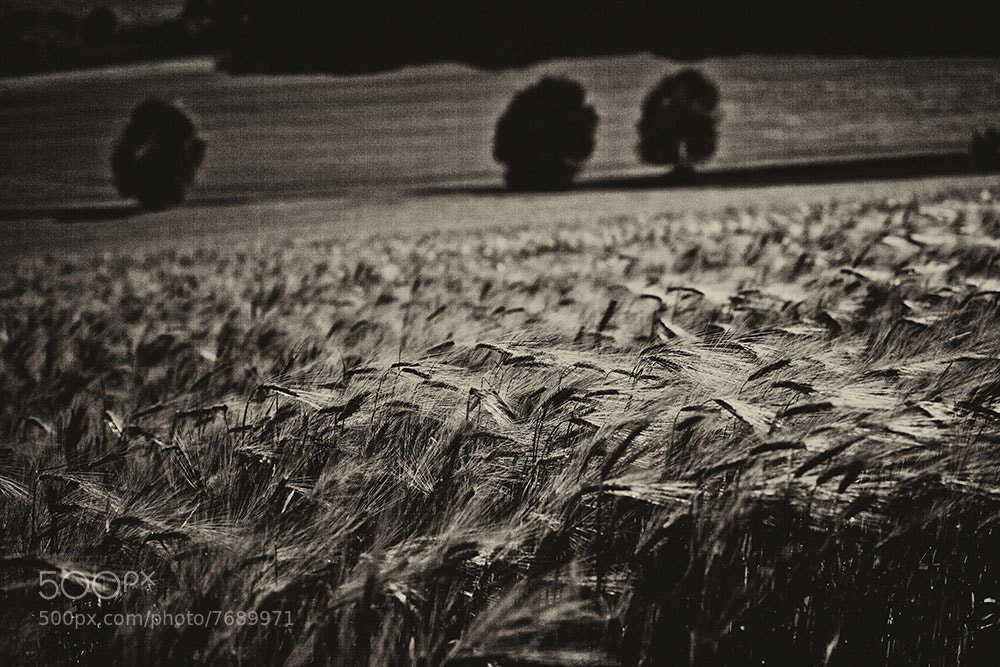 Photograph GRAINFIELD by Michael  Findt (VONFINDT®) on 500px