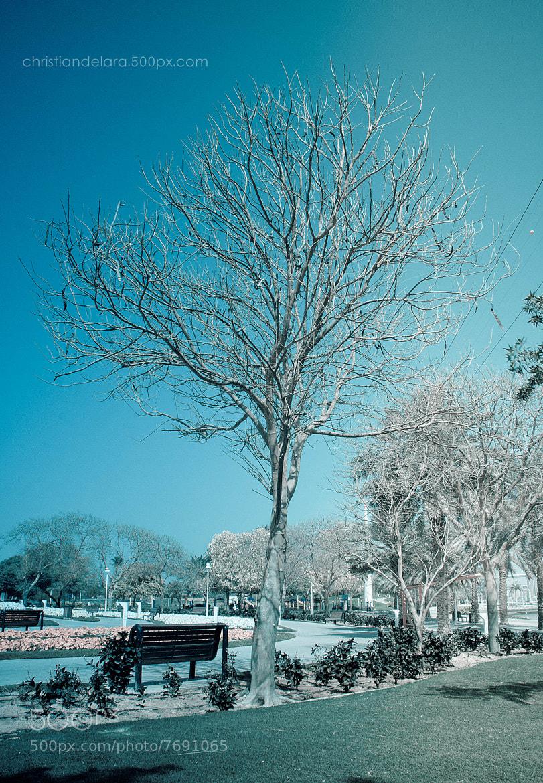 Photograph Spring 2012 by CHRISTIAN DE LARA on 500px