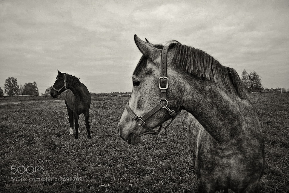 Photograph X & Y by Ignats Knuslis on 500px