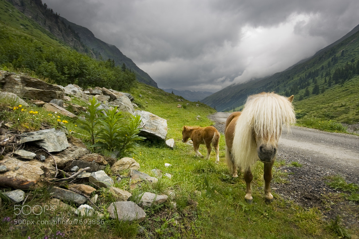 Photograph Little horses by Karina Tischlinger on 500px