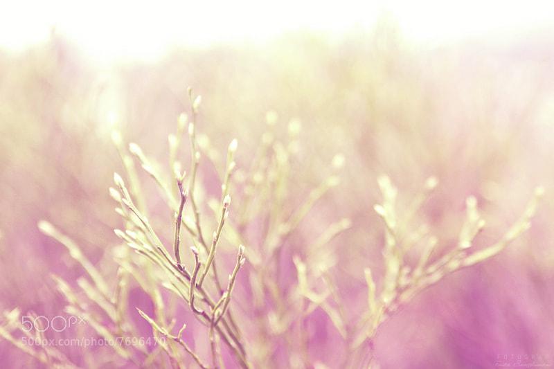 Photograph Pink light  by Frida Bringslimark on 500px