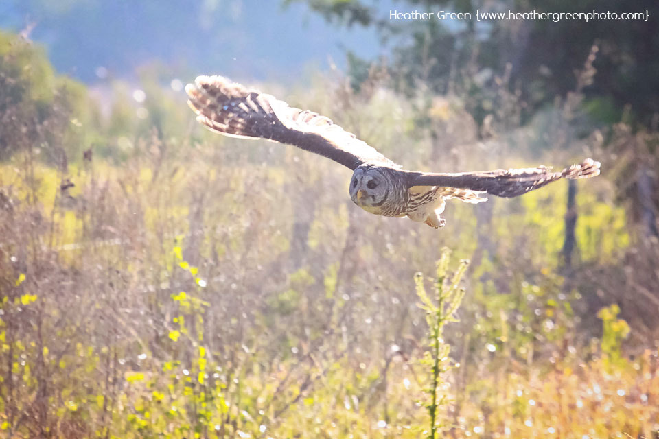 Photograph Morning Flight by Heather Green on 500px