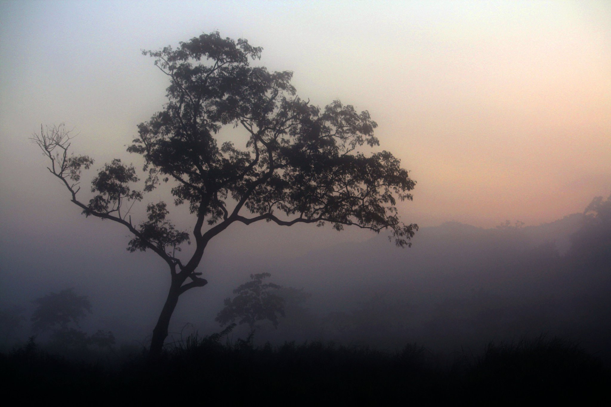 Photograph A tree in the mist by Hrishikesh Arvind Chandanpurkar on 500px