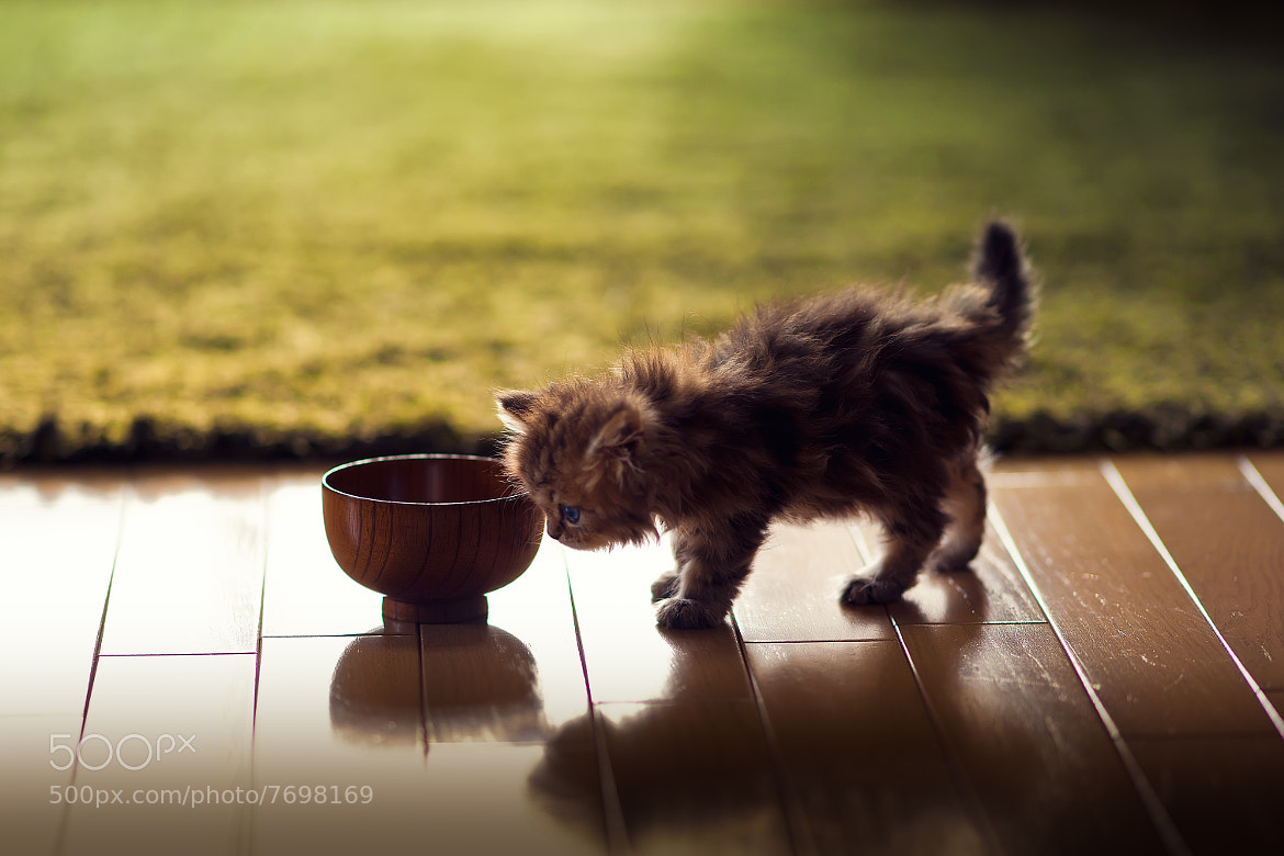 Photograph Kitten and Miso Bowl by Ben Torode on 500px