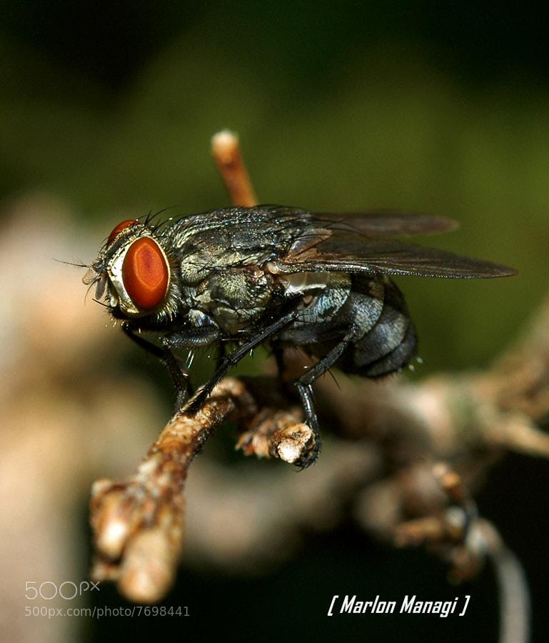 Photograph Fly by Marlon Managi on 500px