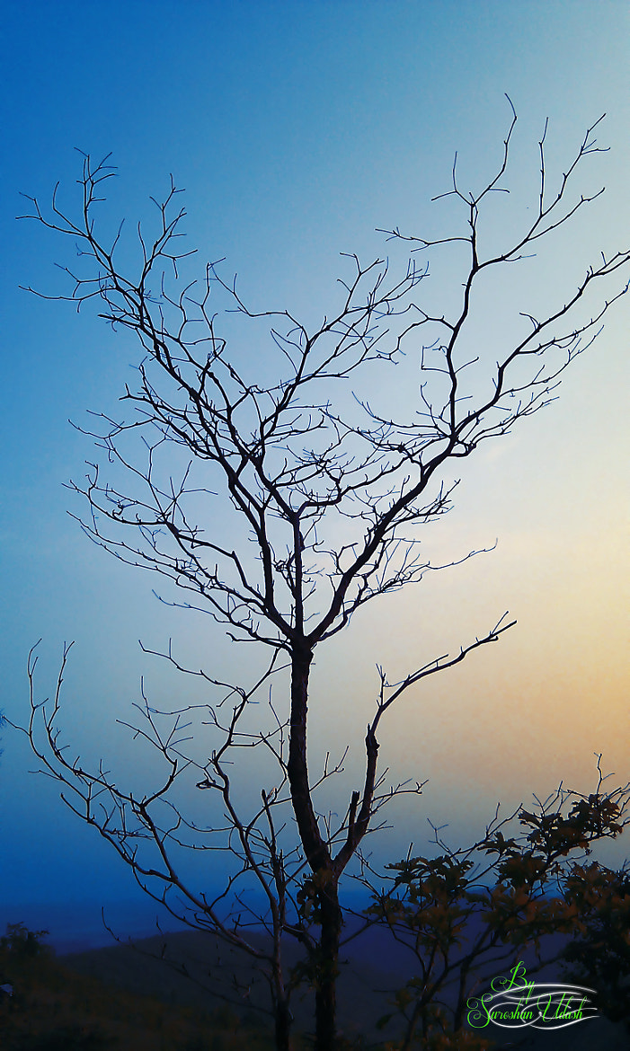 Photograph lonely tree  by Suroshan Udash on 500px