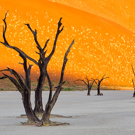 Dead Vlei sunrise by Christopher R. Gray (ChrisGray)) on 500px.com