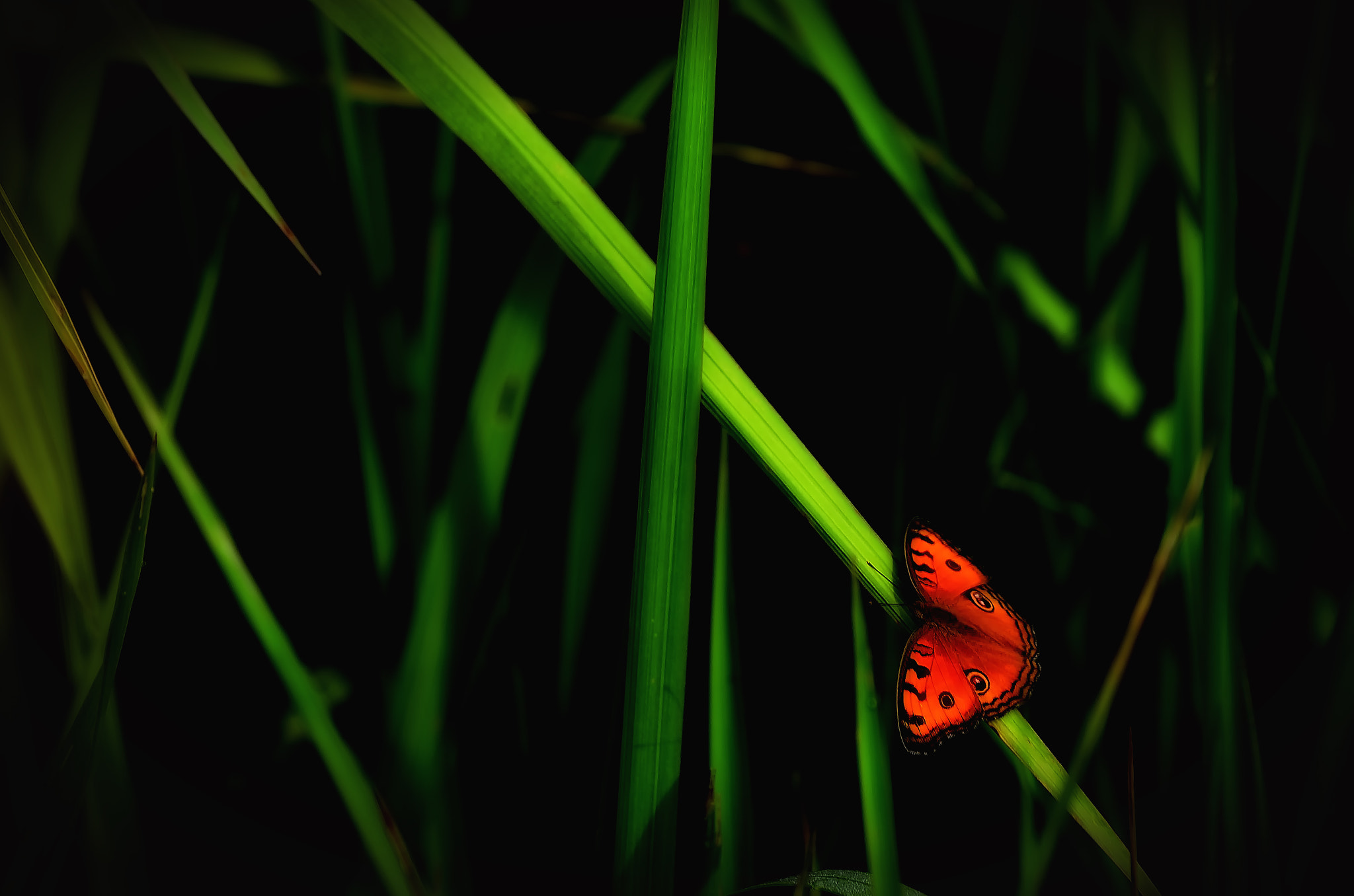 Photograph Grass by Nuang Sangkhsri on 500px
