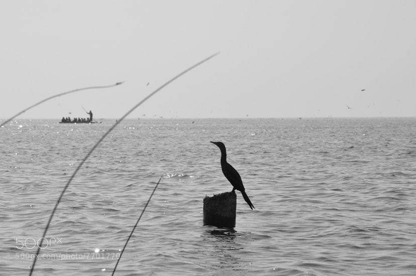 Photograph Black Heron by Jaykaran Sagar on 500px