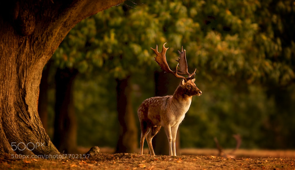 Photograph first light by Mark Bridger on 500px