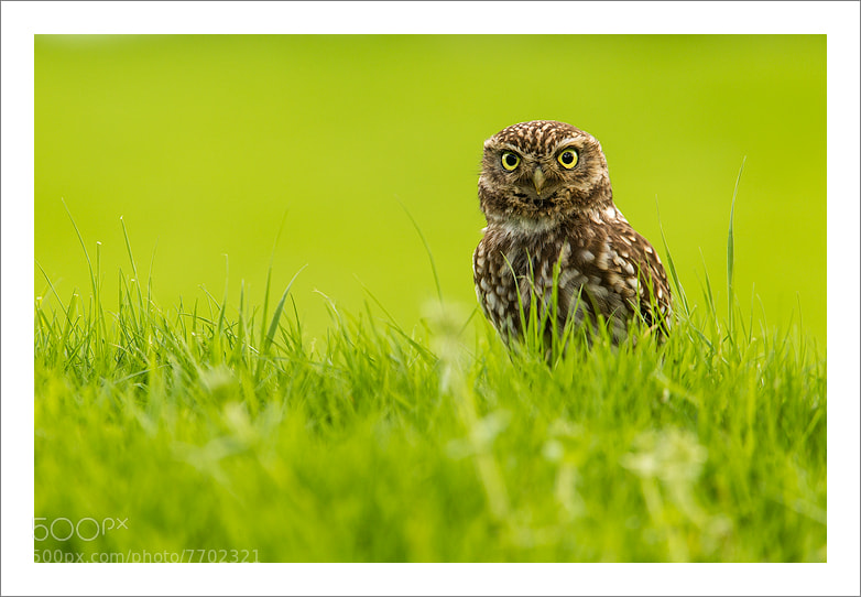 Photograph Big stare by Jules Cox on 500px