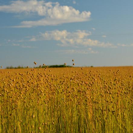 Linen field.