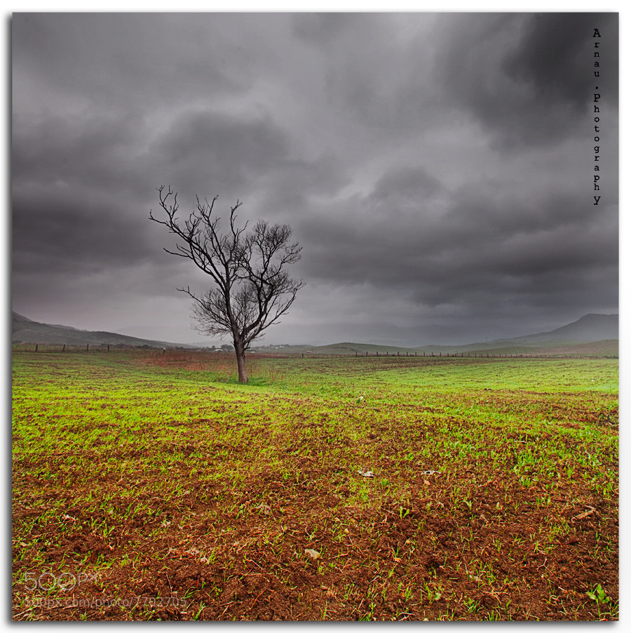 Photograph Alone by Arnau Dubois on 500px