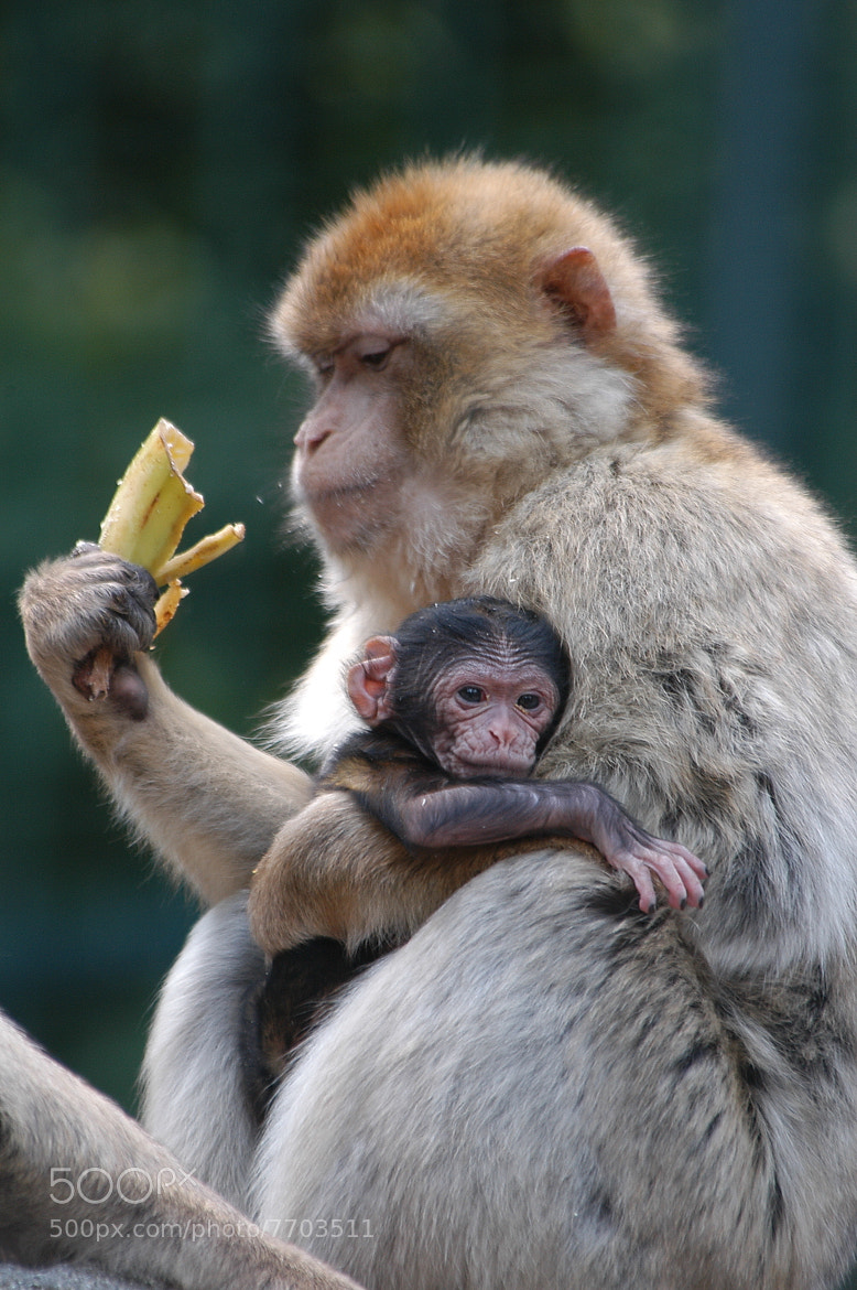 Photograph Banana and Baby by Jutta Kirchner on 500px