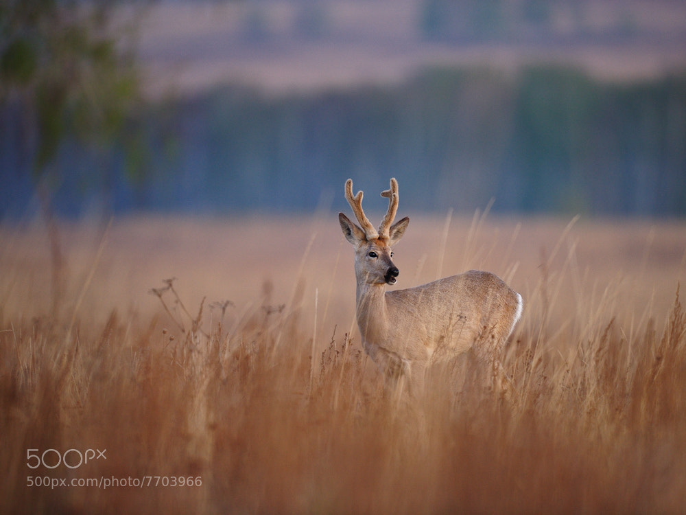 Photograph At one with nature by Vladimir Yezhov on 500px