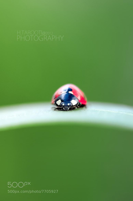 Photograph Beautiful Green by Hussain Tarooti on 500px