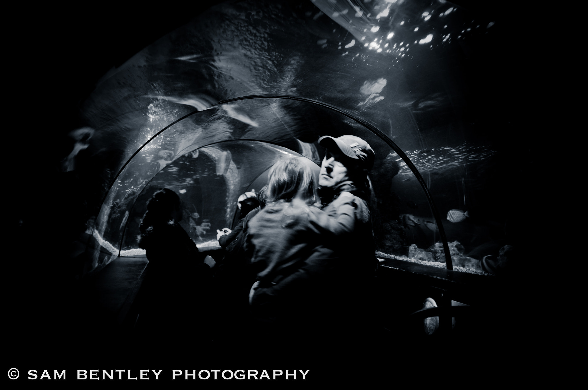 Photograph Protection From Sharks by Sam Bentley on 500px
