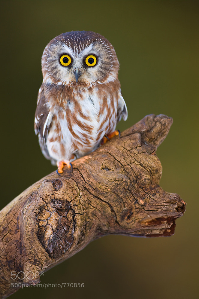 Photograph Petrified by Stephen Oachs on 500px