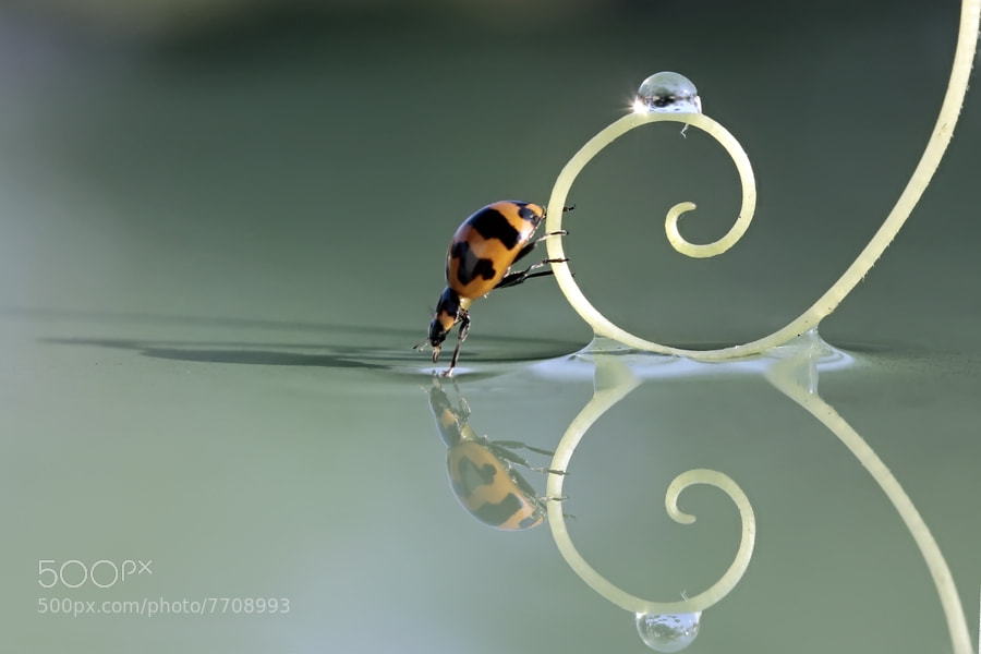 Photograph Bugflection by teguh santosa on 500px