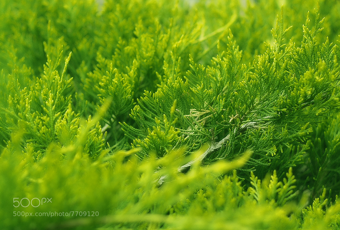Photograph Green by Anton Krayniy on 500px
