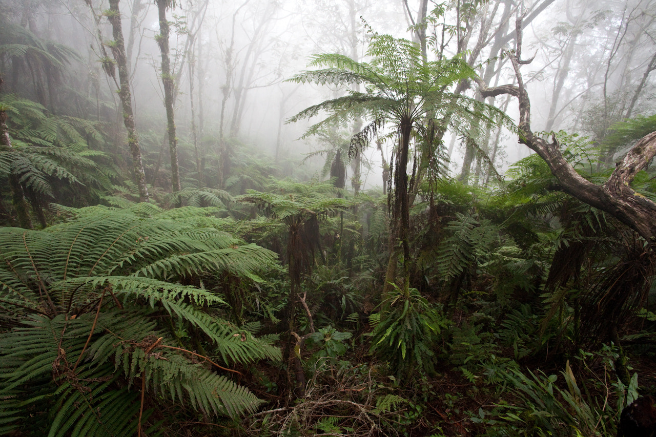 Photograph Cloudforest by Robin Moore on 500px