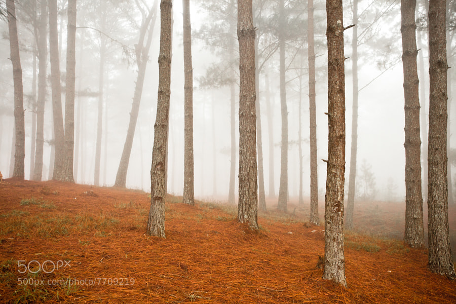 Misty forest by Robin Moore (robinmoore) on 500px.com