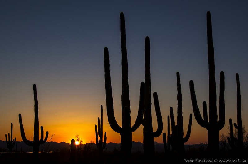 Photograph Saguaro park by Peter Smato Smatana on 500px
