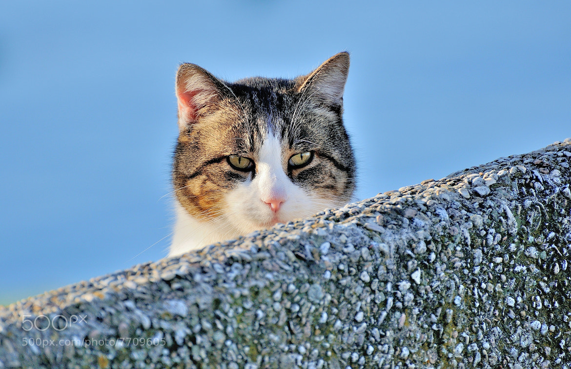 Photograph Spying on the Enemy! by Renato Pantini on 500px