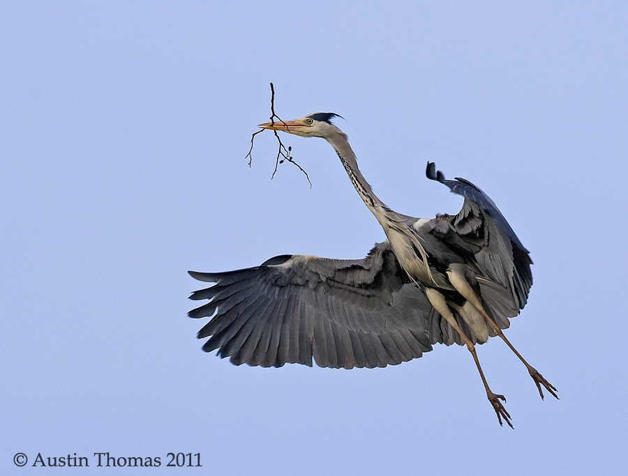 Photograph Heron Nest Building by Austin Thomas on 500px