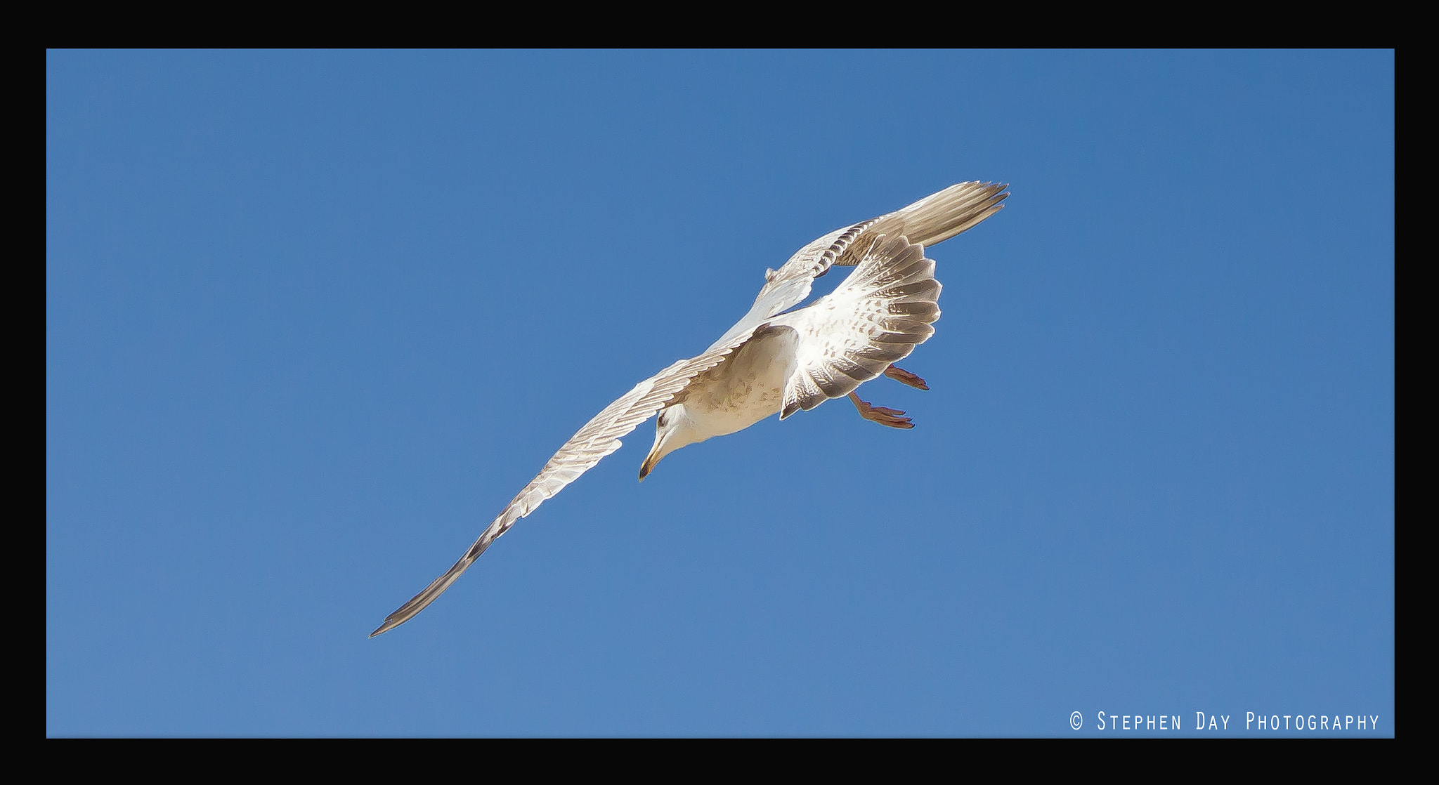 Photograph ''Engaged In Flight'' by Stephen Day Photography on 500px