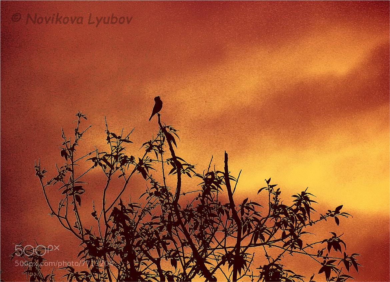 Photograph What do birds sing?... by Lyubov Novikova on 500px