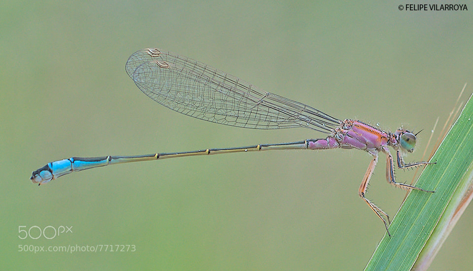 Photograph Blue/Pink by Felipe  vilarroya on 500px