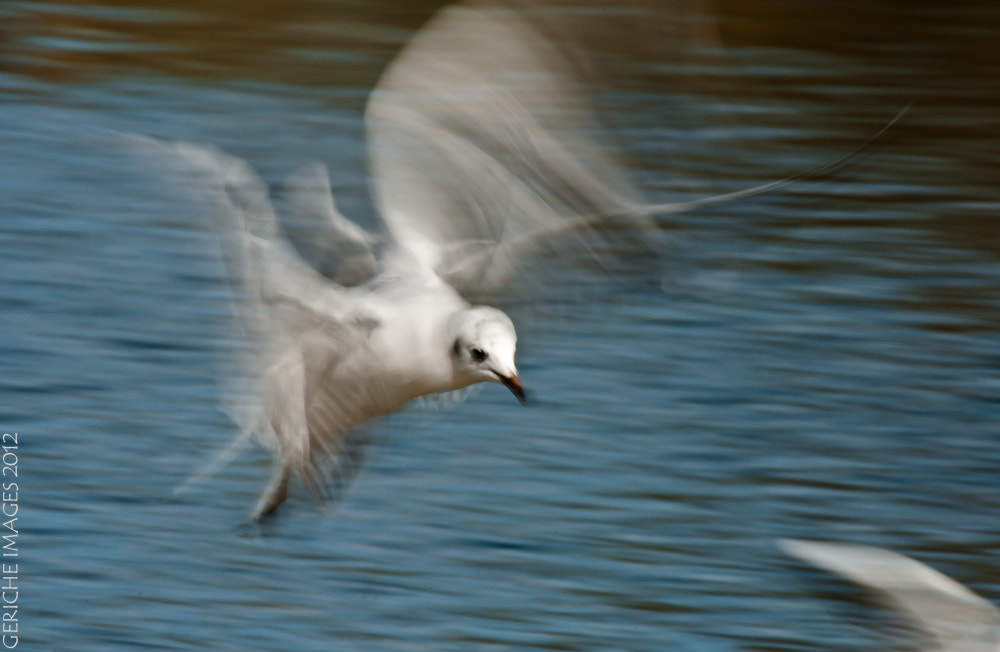 Photograph Park Gulls by Geriche  Images on 500px