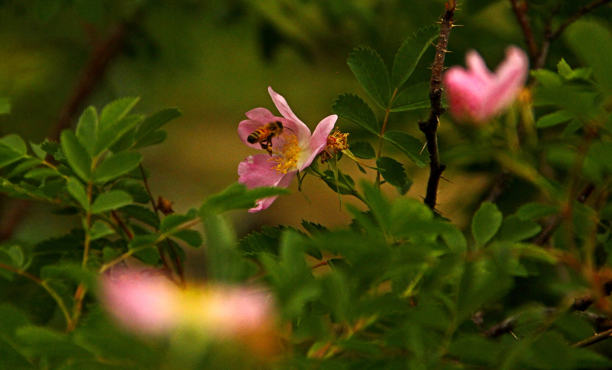 Photograph Honey Bee by Johnny Gomez on 500px