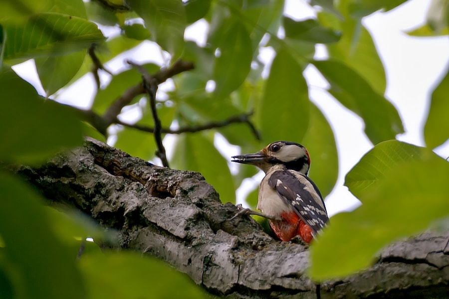 Photograph Woody's lunch by Ion Lacatus on 500px