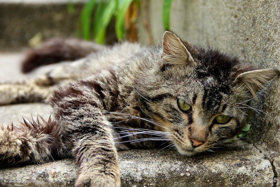 Photograph Street Cat by Rui Mendonza on 500px