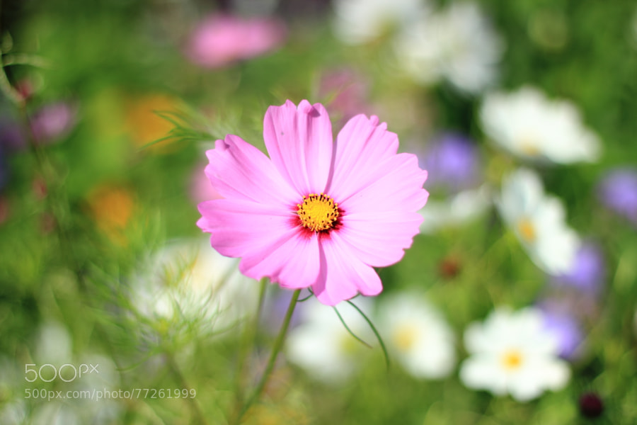 Photograph Flower by Jenny 2thegroove on 500px
