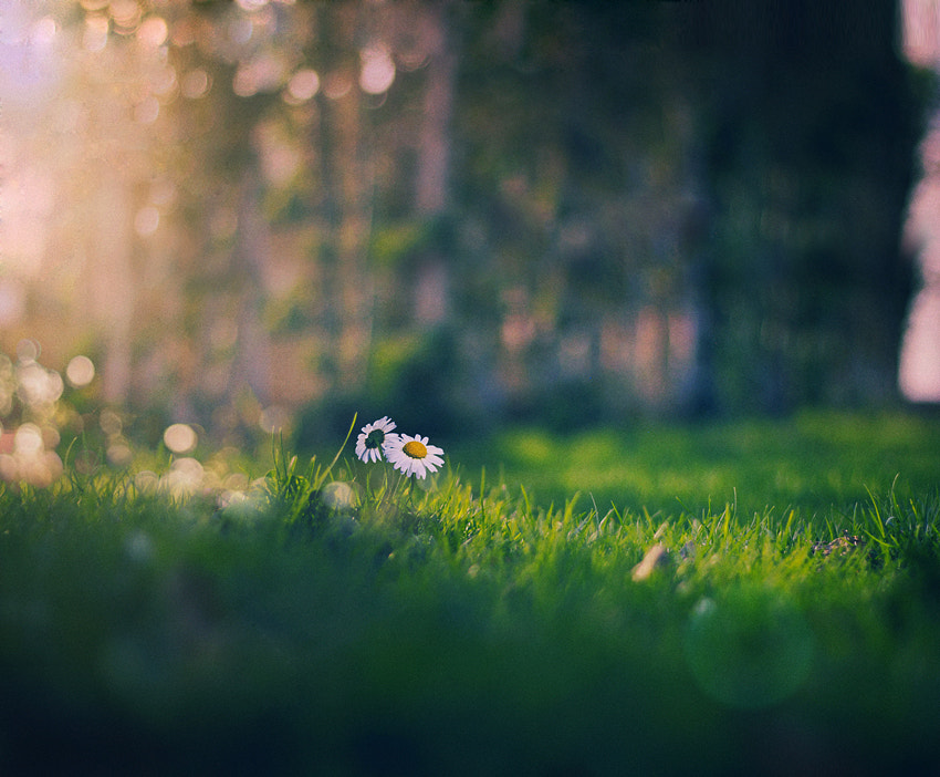 Photograph A Little Hope by Sweetlife on 500px