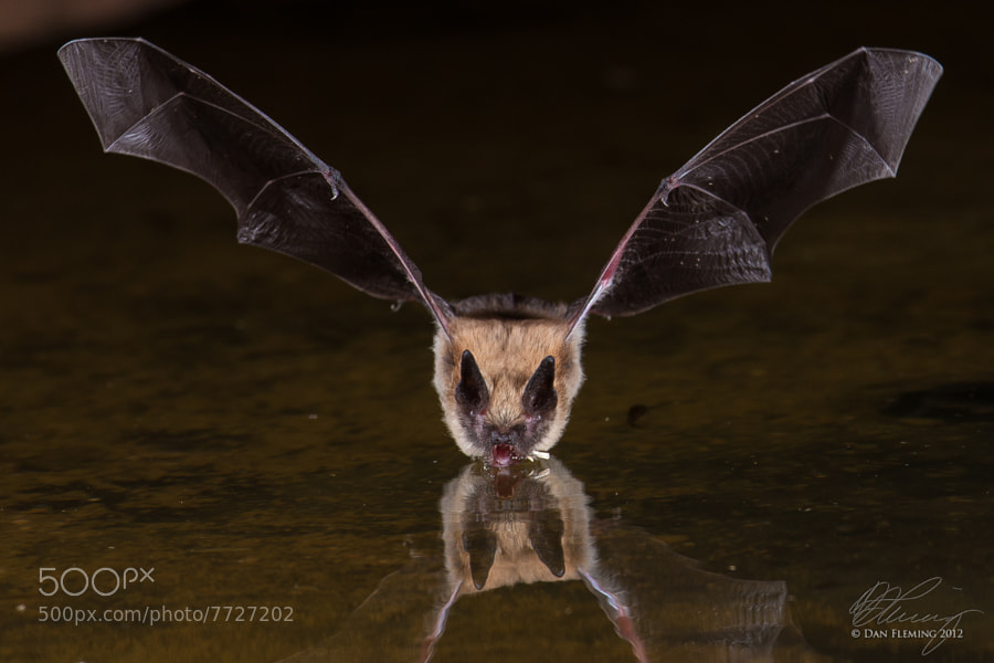 Photograph Gone Batty by Dan Fleming on 500px