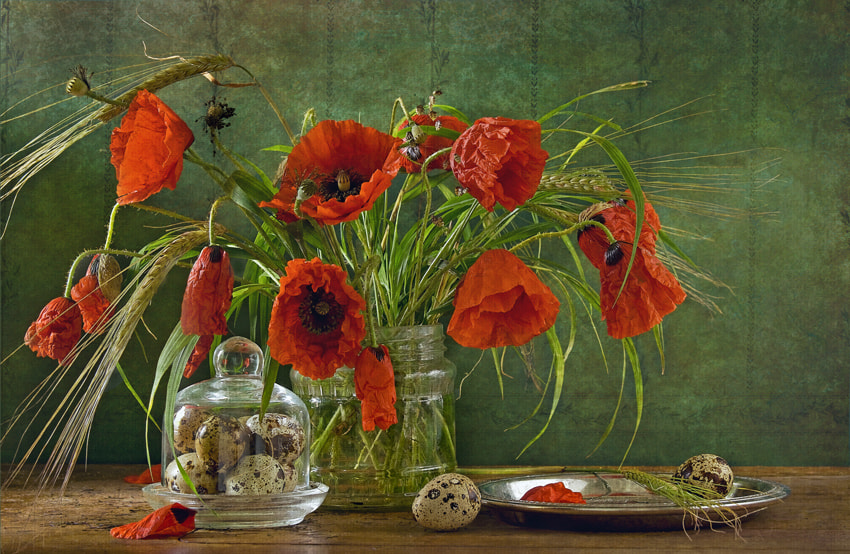 Photograph poppies by Yulia Pletinka on 500px