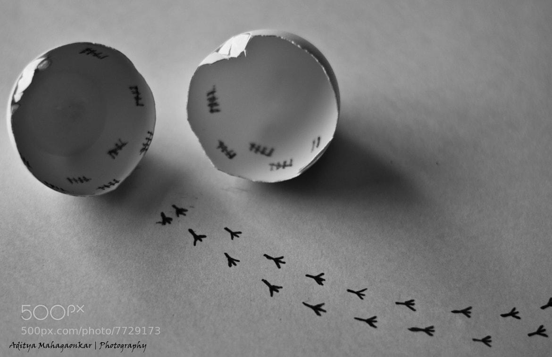 Photograph The Chick Escape by Aditya Mahagaonkar on 500px