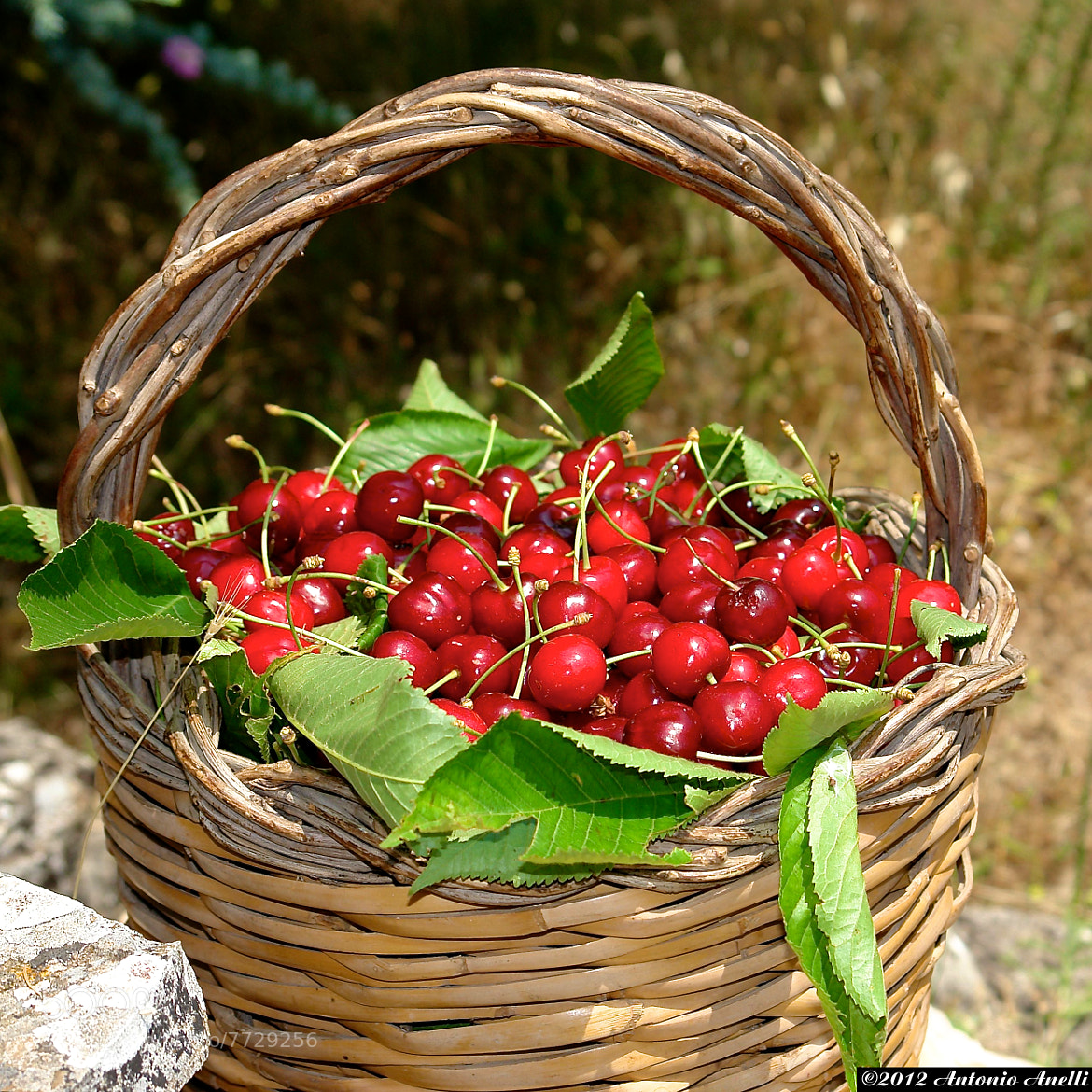 "Photograph ""Wow...a cherry's basket"" by Antonio Anelli on 500px"