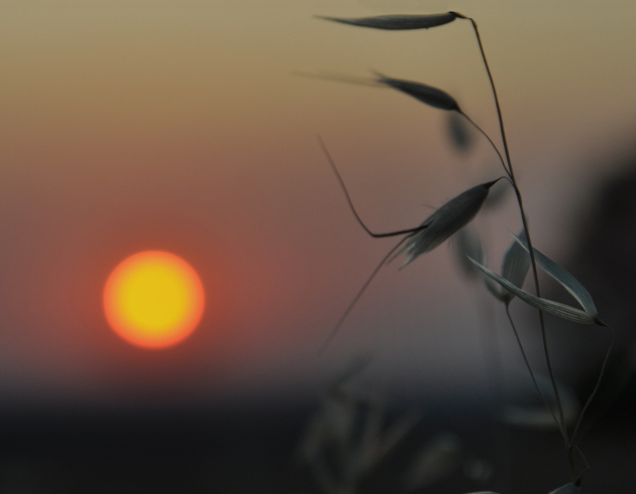 Photograph at the mercy of the wind by Silena  Lambertini on 500px