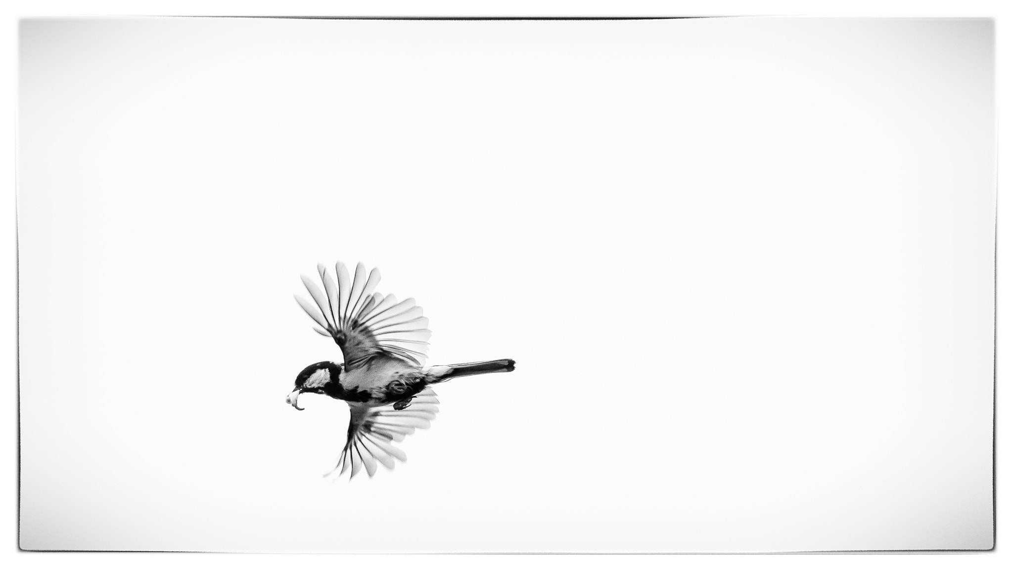 Photograph Bird flying. by Kolbein Svensson on 500px