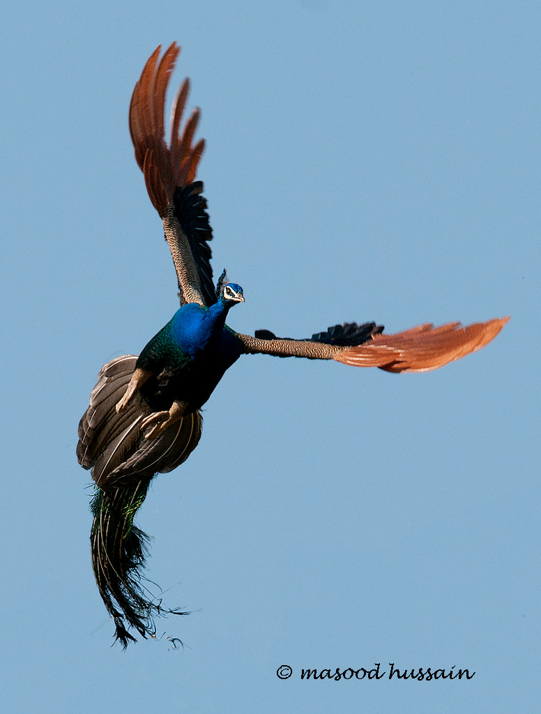 Photograph COLORS OF FREEDOM by Masood Hussain on 500px