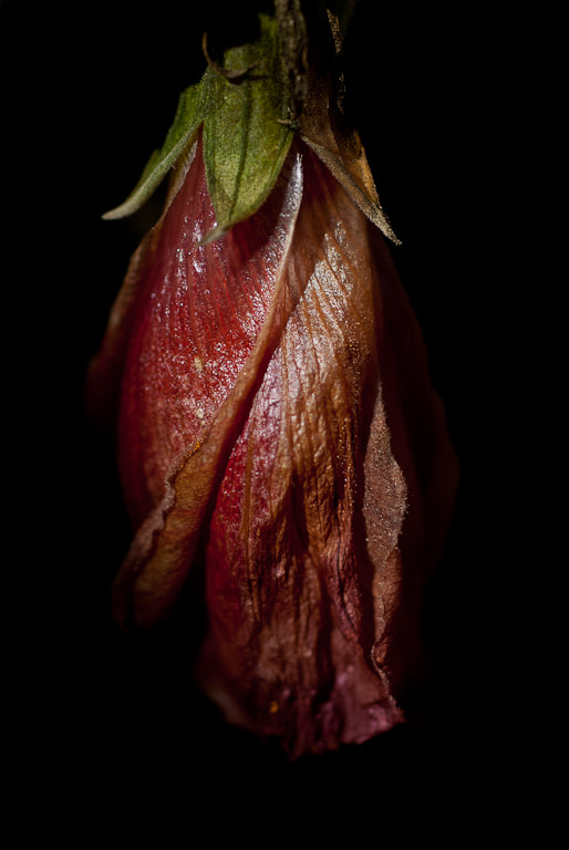 Photograph Dying by Lars  Allebrink on 500px