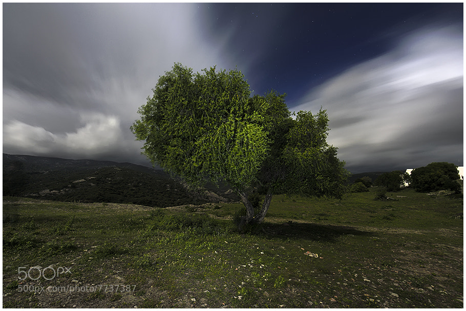 Photograph Arbol Nocturno by César Comino García on 500px
