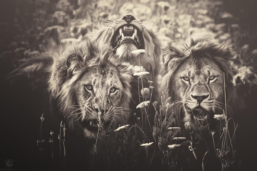African souls: V by Manuela Kulpa on 500px.com