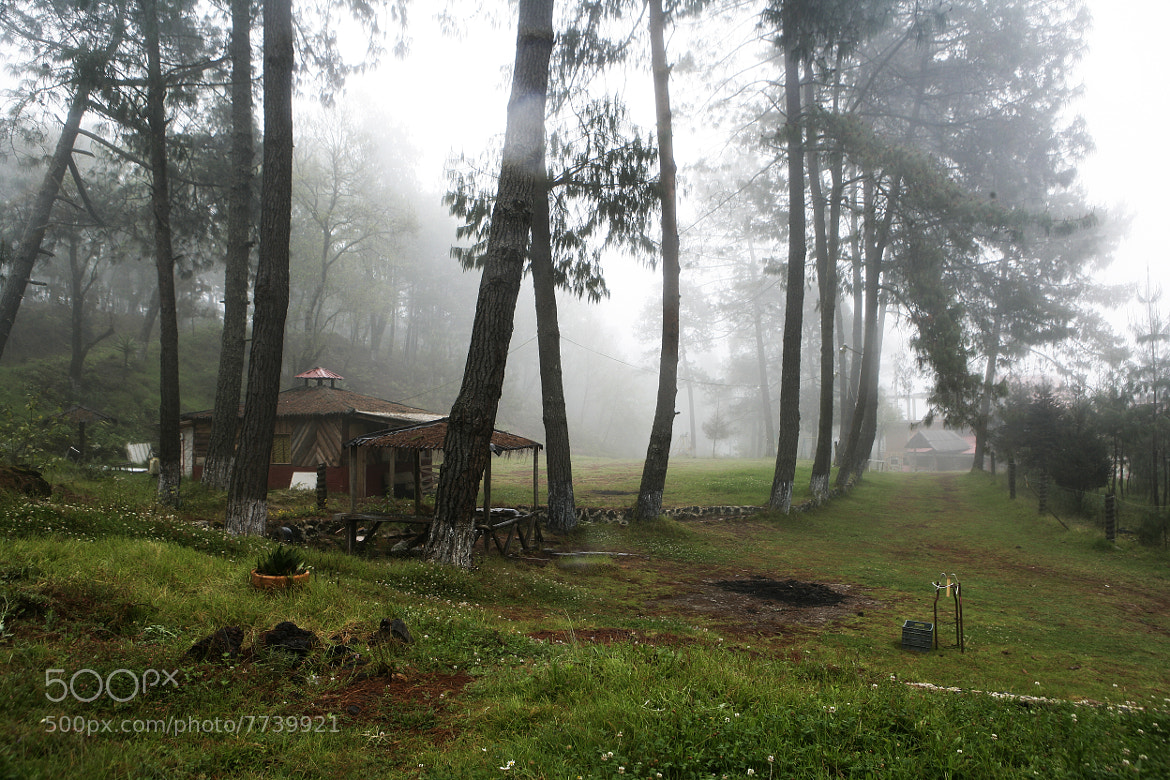 Photograph Pine forest in the fog by Cristobal Garciaferro Rubio on 500px