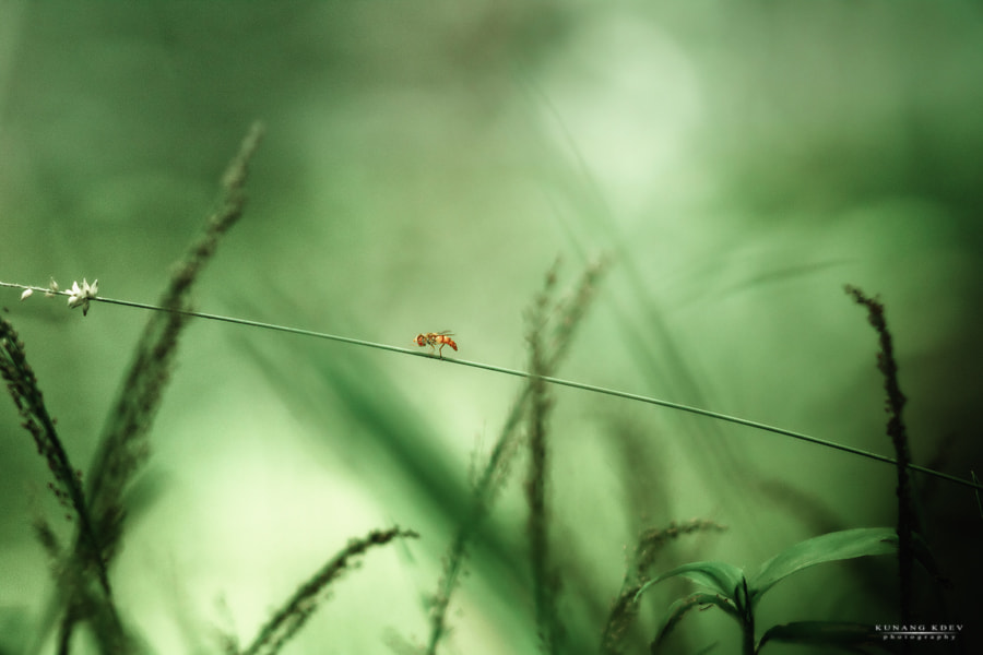 Photograph ___bee___ by kunang kdev on 500px